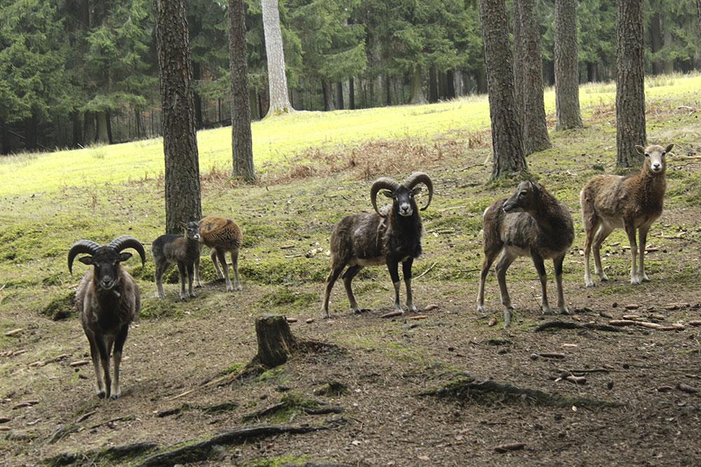 Ausflugstipps Franken mit Kindern und Jugendlichen, Familienausflug in Mittelfranken, Unterfranken und Oberfranken, Wildpark Hufeisen, Veldensteiner Forst