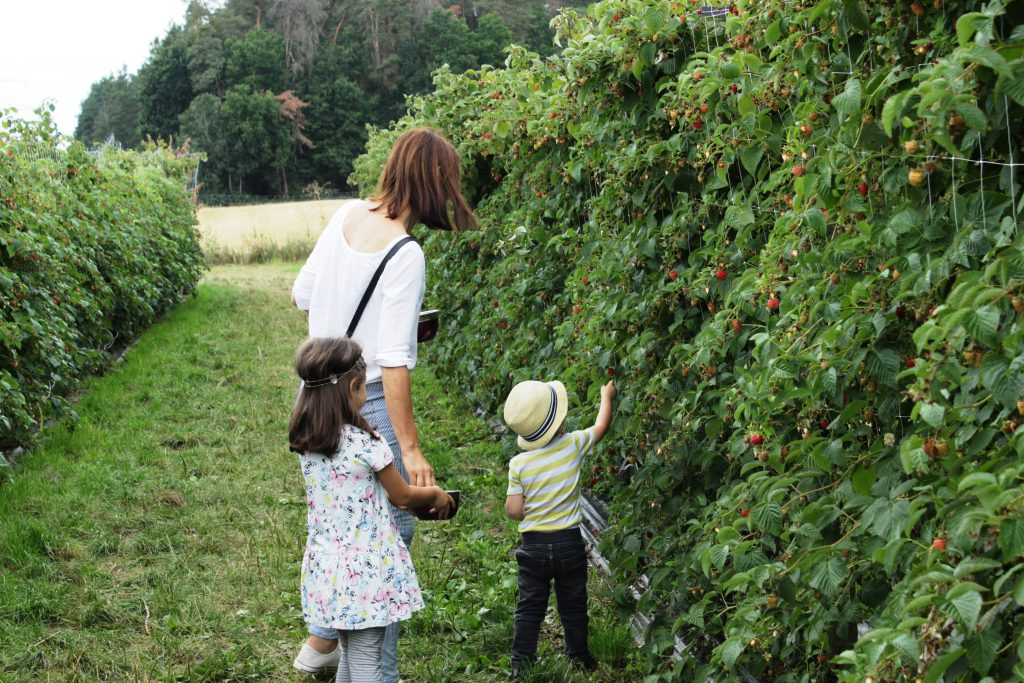 Ausflugsziel Schwabach, Beerencafe Wolkersdorf, Erdbeeren mit Kindern selberpflücken, Himbeeren selbst pflücken, Ausflugtipp mit Kindern in Franken, Mittelfranken, Nähe Nürnberg, mit Kindern Natur erleben, Ferientipp, Sommerferien in Mittelfranken