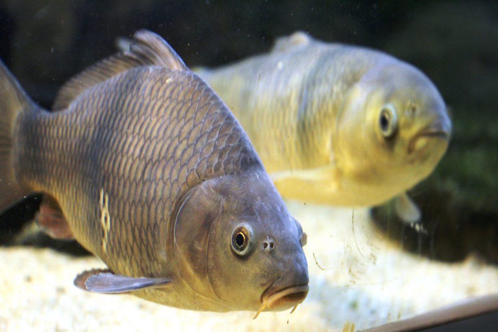 Das Freiland-Aquarium und -Terrarium in Stein bei Nürnberg, Interessantes Ausflugsziel für Familien in Franken, Heimische Amphibien und Reptilien mit Kindern und Jugendlichen beobachten, Amphibien und Reptilien in Deutschland, Mittelfranken