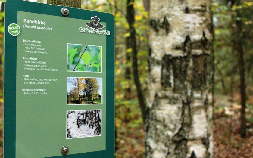 Erlebe-Bruder-Wald, Waldlehrpfad Bamberg, Oberfranken, Franken mit Kindern, Ausflugstipps für Familien