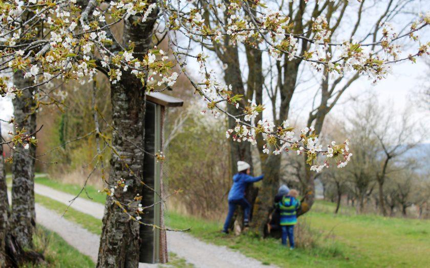 Streuobsterlebnispfad Burgbernheim, Wandern mit Kindern, Franken mit Kindern