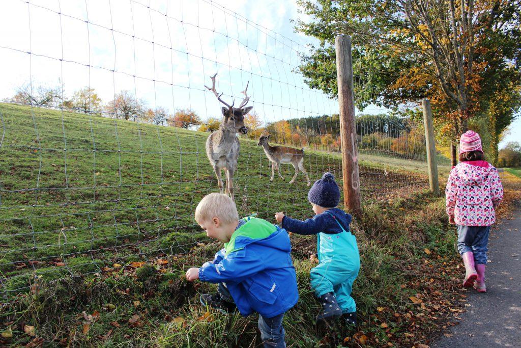 Schaukelweg Vestenbergsgreuth, Greuth, Mittelfranken, WAndern mit Kindern, Familienausflug bei Erlangen, Franken mit Kindern
